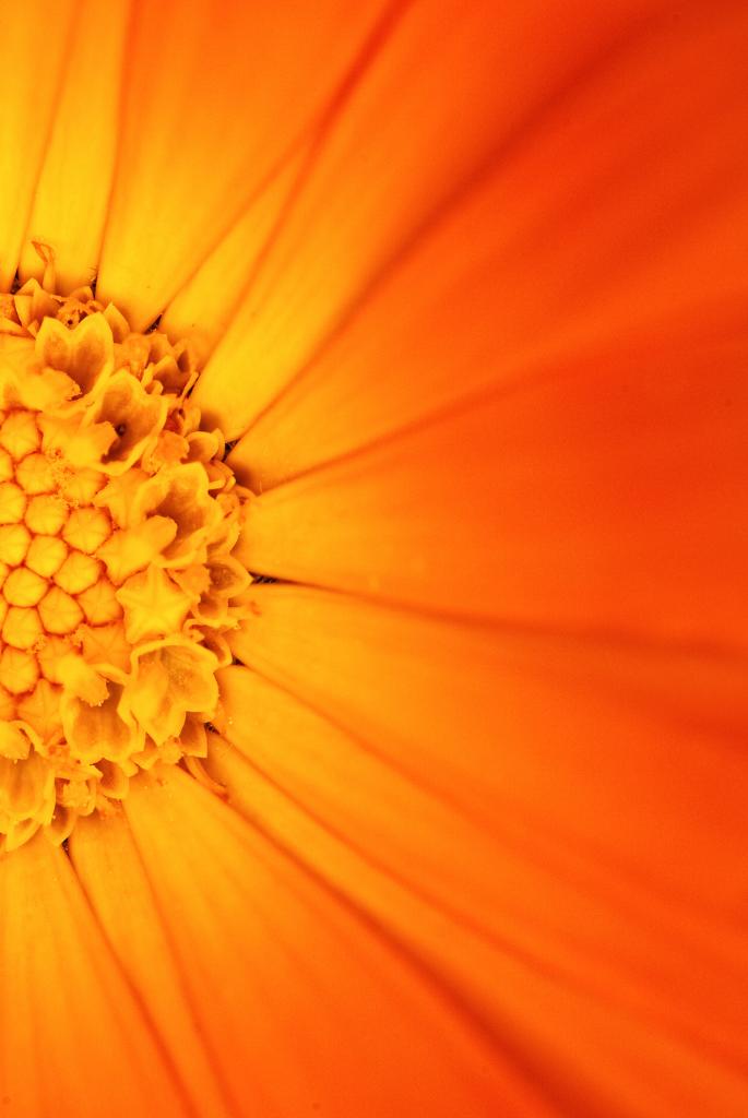 oranje bloem-ek borrelpakket
